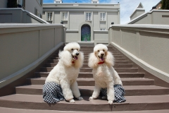 Chucks_Dogs